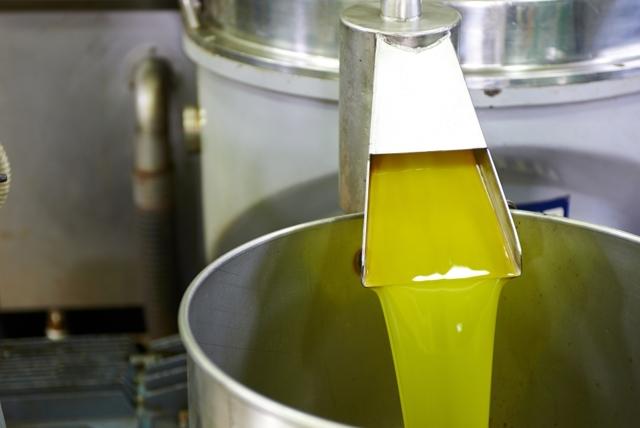 Оливковое масло для волос – полезные свойства, лучшие рецепты и способы применения
