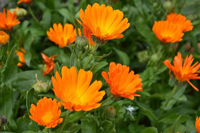 Растительный пилинг для лица – особенности травяной чистки, плюсы и минусы, рецепты в домашних условиях