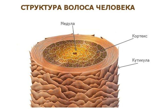Осветление волос «Гидроперитом» – инструкция по применению, как развести средство с аммиаком