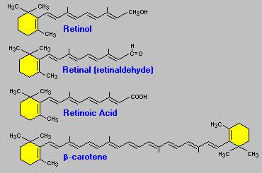Чем отличается ретинола ацетат от ретинола пальмитата – в чем разница, состав и принцип действия