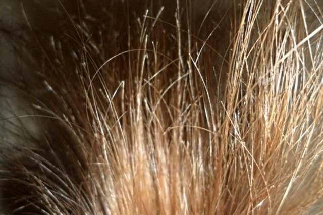 Масло-флюид для волос – что это такое и как его использовать, виды и особенности, плюсы и минусы