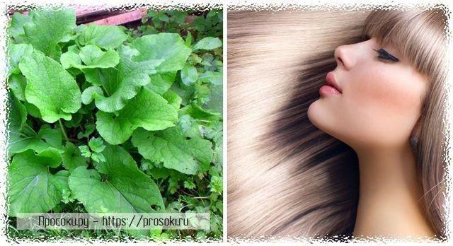 Как использовать корень лопуха для волос – рецепты отвара для ополаскивания и масок